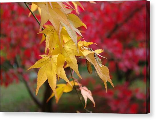 Autumn Leaves Canvas Print by Tony Serzin