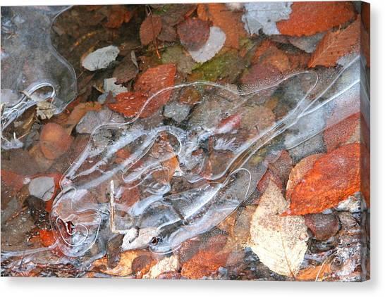 Autumn Leaves Under Ice Canvas Print by Carolyn Reinhart