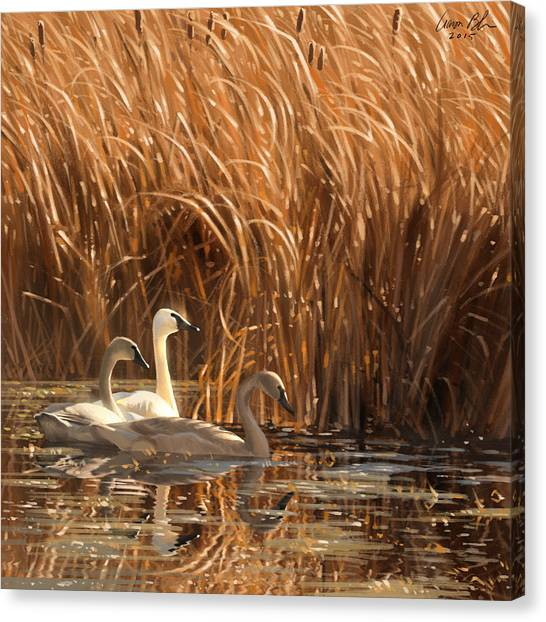 Ducks Canvas Print - Autumn Light- Trumpeter Swans by Aaron Blaise