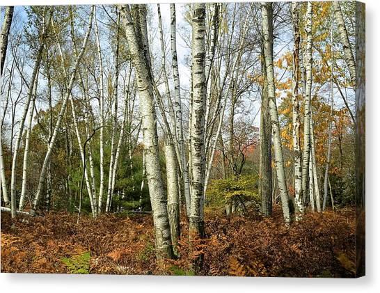 Autumn Majesty - Marion Brooks Natural Area Canvas Print