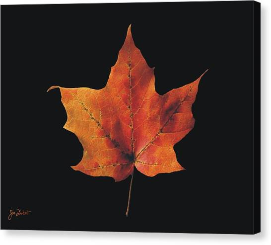 Autumn Maple Leaf 2 Canvas Print