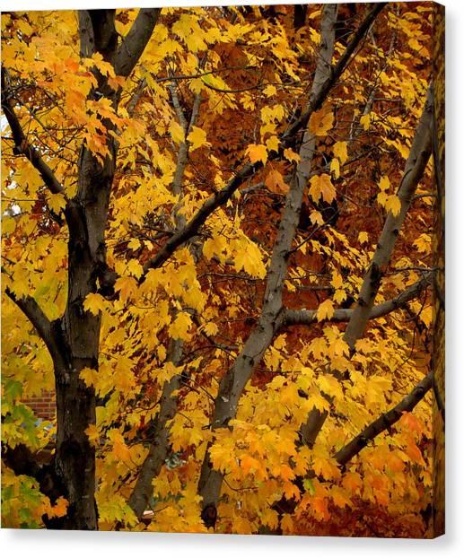 Autumn Moods 21 Canvas Print