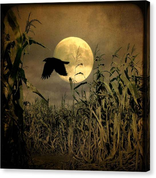 Corn Field Canvas Print - Crow Flies Past The Harvest Moon by Gothicrow Images