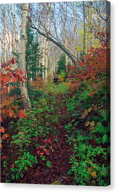 Autumn On Mount Hale Canvas Print