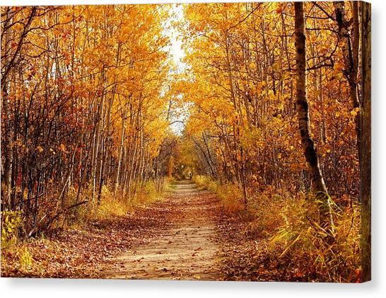 Autumn On The Harte Trail Canvas Print