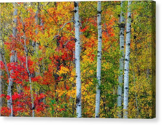 Hawks Canvas Print - Autumn Palette by Mary Amerman