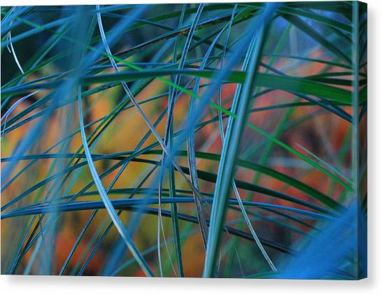 Autumn Pampas Grass Canvas Print by Rebeka Dove