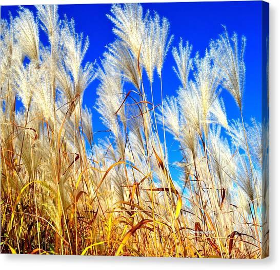 Autumn Pampas Canvas Print