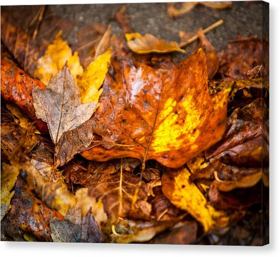 Autumn Pile Canvas Print