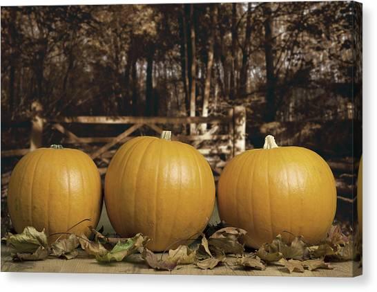 Pumpkin Patch Canvas Print - Autumn Pumpkins by Amanda Elwell