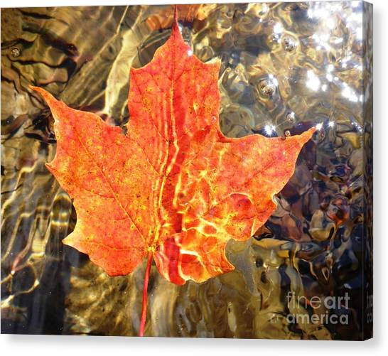 Autumn Reflections Canvas Print