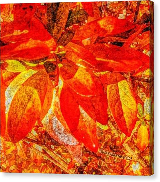 Autumn Leaves Canvas Print - Autumn Rhododendron Leaves Bright by Anna Porter