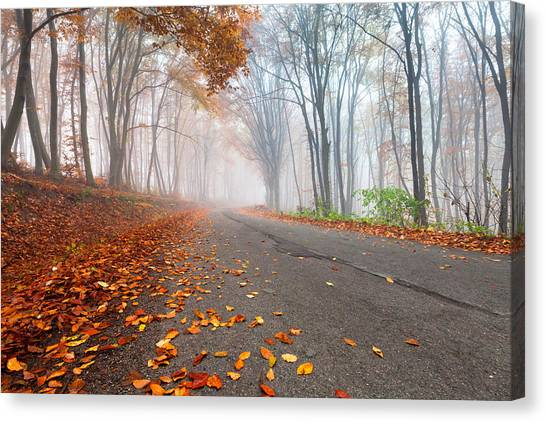 Danube Canvas Print - Autumn Road by Evgeni Dinev