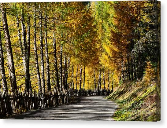 Winding Road Through The Autumn Trees Canvas Print