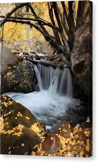 Autumn Rush Canvas Print