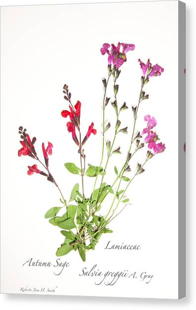 Autumn Sage Canvas Print