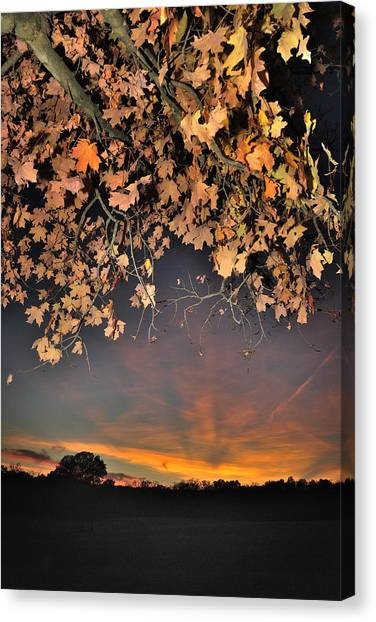 Autumn Sky And Leaves 1 Canvas Print