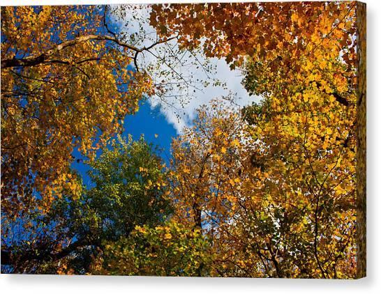 Autumn Sky Canvas Print by Claus Siebenhaar