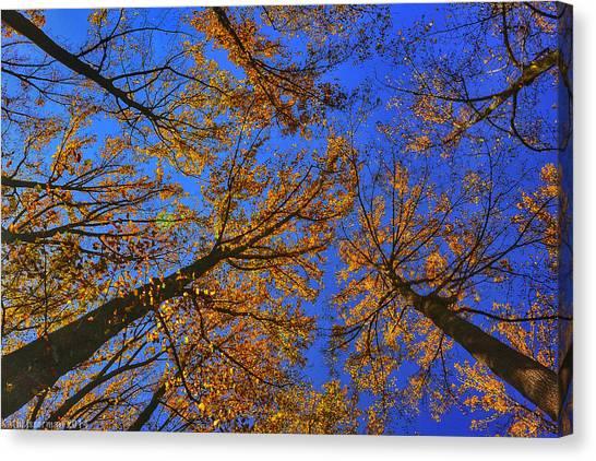 Autumn Sky Canvas Print by Kathi Isserman