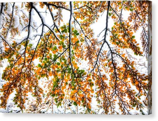 Autumn Snow Canvas Print by Roman St