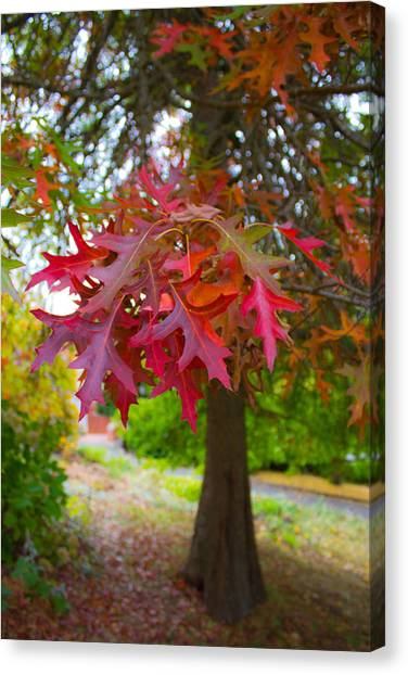 Autumn Splendor Canvas Print by Mamie Thornbrue