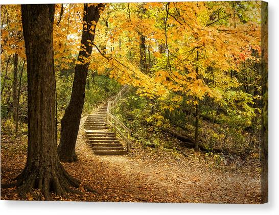 Forest Paths Canvas Print - Autumn Stairs by Scott Norris