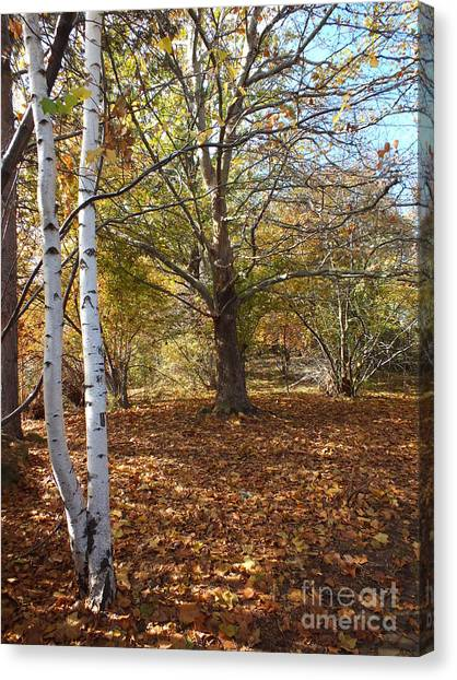 Autumn Stroll  Canvas Print by Kimberly Maiden