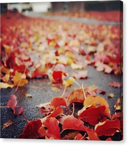 Autumn Leaves Canvas Print - Autumn by Suzanne Clark