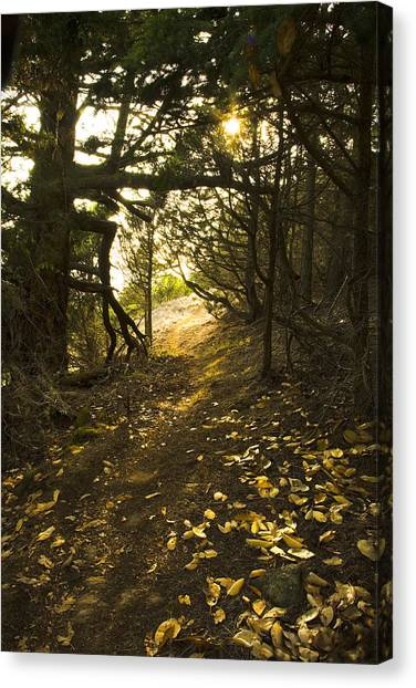 Autumn Trail In Woods Canvas Print
