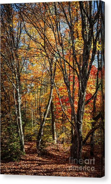 Fallen Tree Canvas Print - Autumn Trees by Elena Elisseeva
