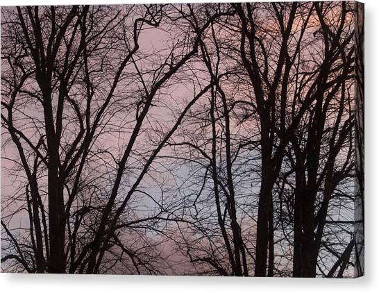 Autumn Trees Canvas Print by Paul Muscat