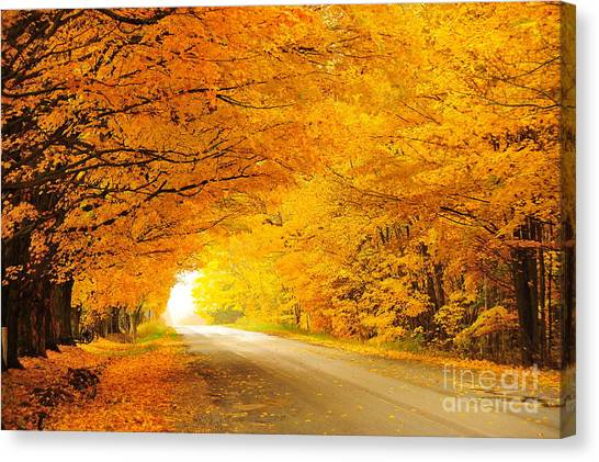 Autumn Tunnel Of Gold 8 Canvas Print