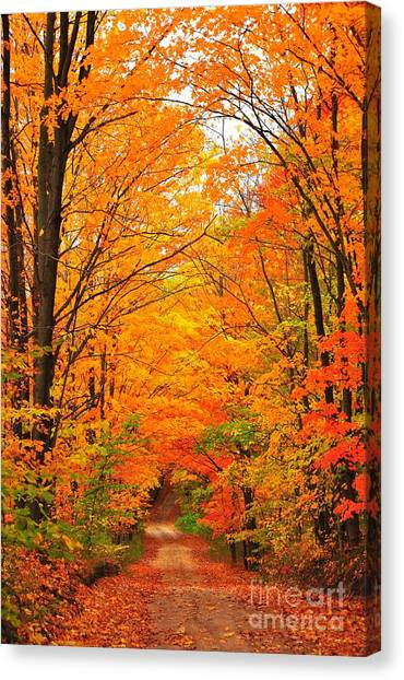 Autumn Tunnel Of Trees Canvas Print