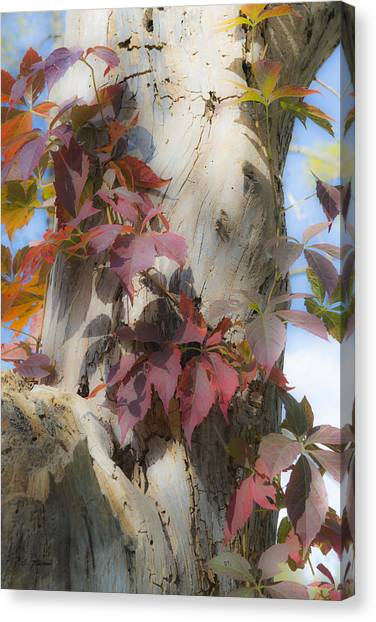 Autumn Veil Canvas Print