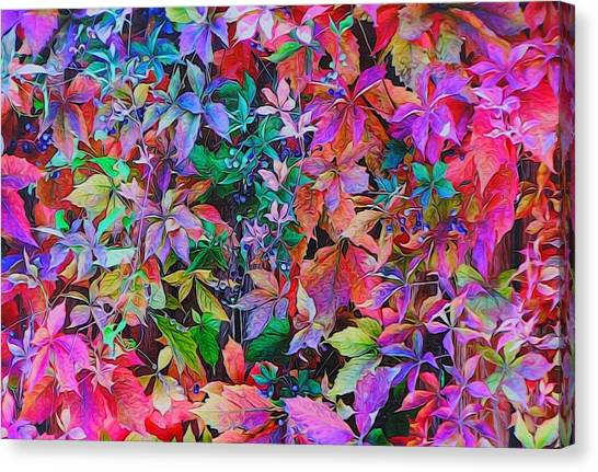 Autumn Virginia Creeper Canvas Print