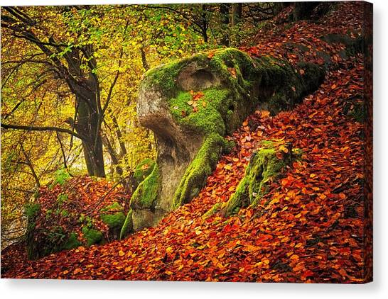 Autumn Walk In Forrest Canvas Print