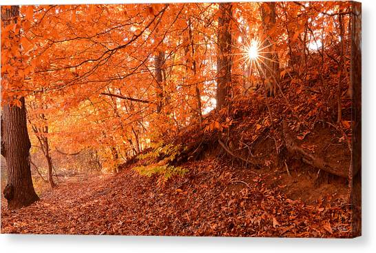 Maple Leaf Art Canvas Print - Autumn Walk by Lourry Legarde