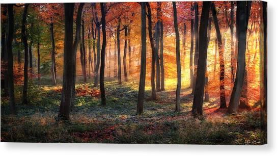 Tree Trunks Canvas Print - Autumn Woodland Sunrise by