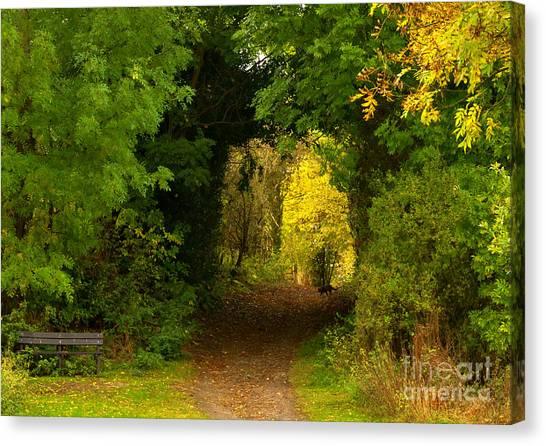Autumn Woodland Walk Canvas Print