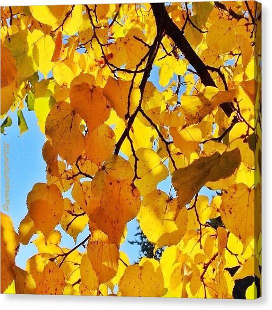 Autumn Leaves Canvas Print - Autumn Yellows by Anna Porter