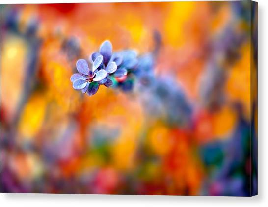 Autumnal Berberis Canvas Print
