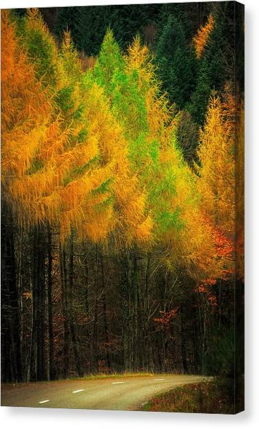 Autumnal Road Canvas Print by Maciej Markiewicz