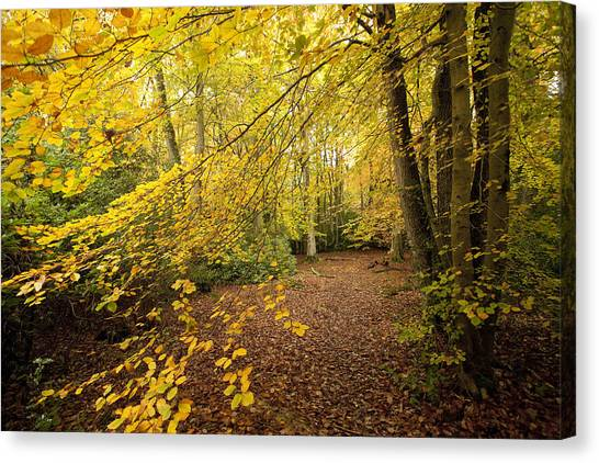 Autumn Scene Canvas Print - Autumnal Woodland II by Natalie Kinnear