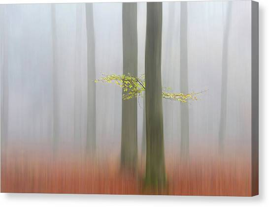 Foggy Forests Canvas Print - Autumnmorning by Huib Limberg
