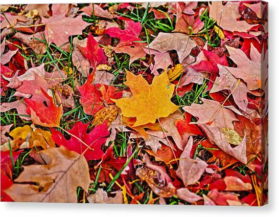 Autumn's Blanket Canvas Print by SCB Captures