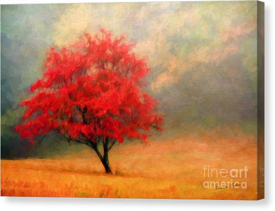 Dogwood Canvas Print - Autumns Colors by Darren Fisher