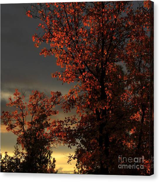 Autumn's First Light Canvas Print