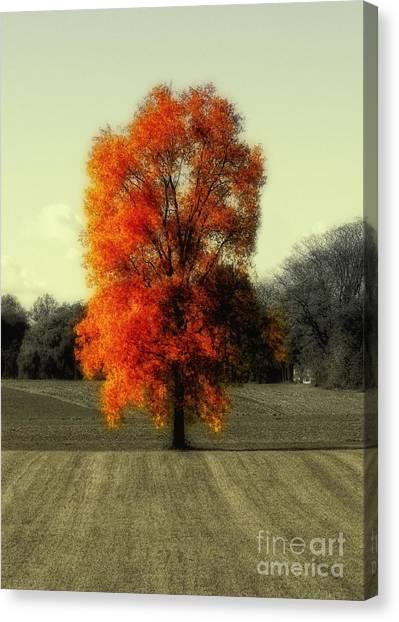 Autumn's Living Tree Canvas Print