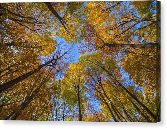 Autumn's Rooftop Canvas Print