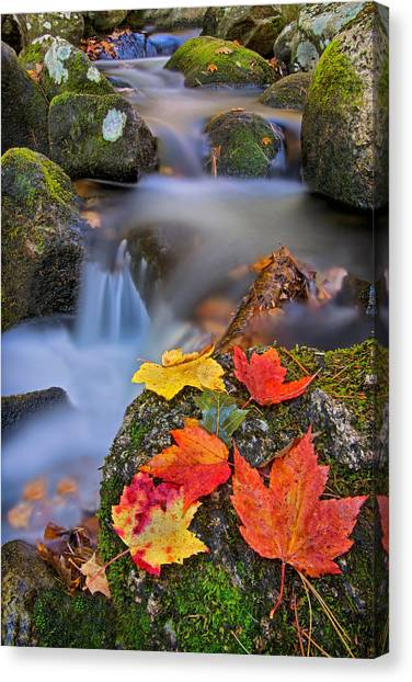 Autumn's Song Canvas Print